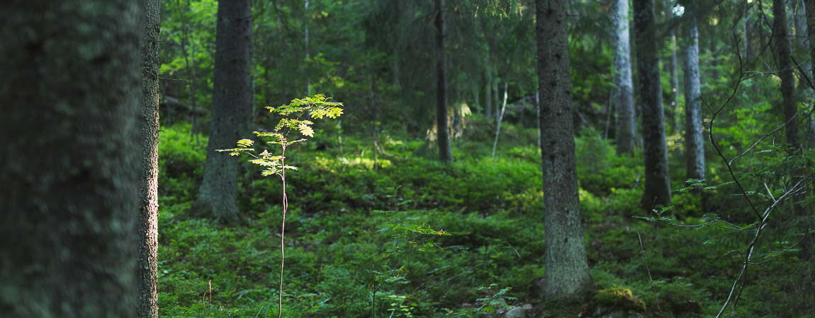 Exture - Finnish Nature